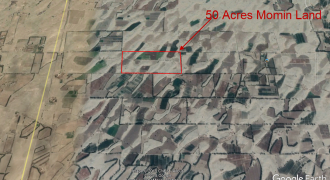 Naval Allotted Agricultural 50 Acres Land For Sale in Bhakkar